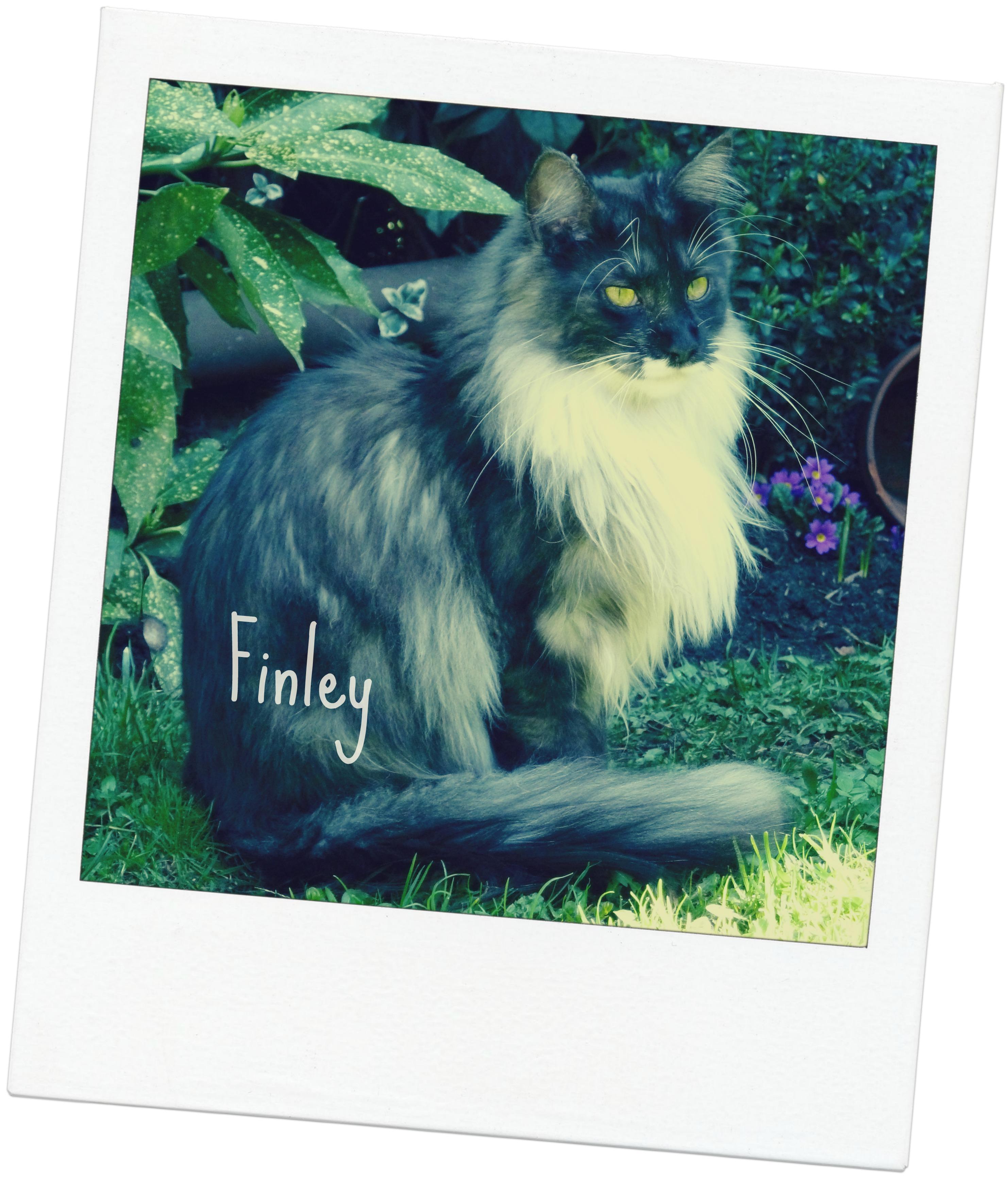 finley blog