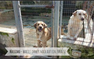Tierschutz Ausland