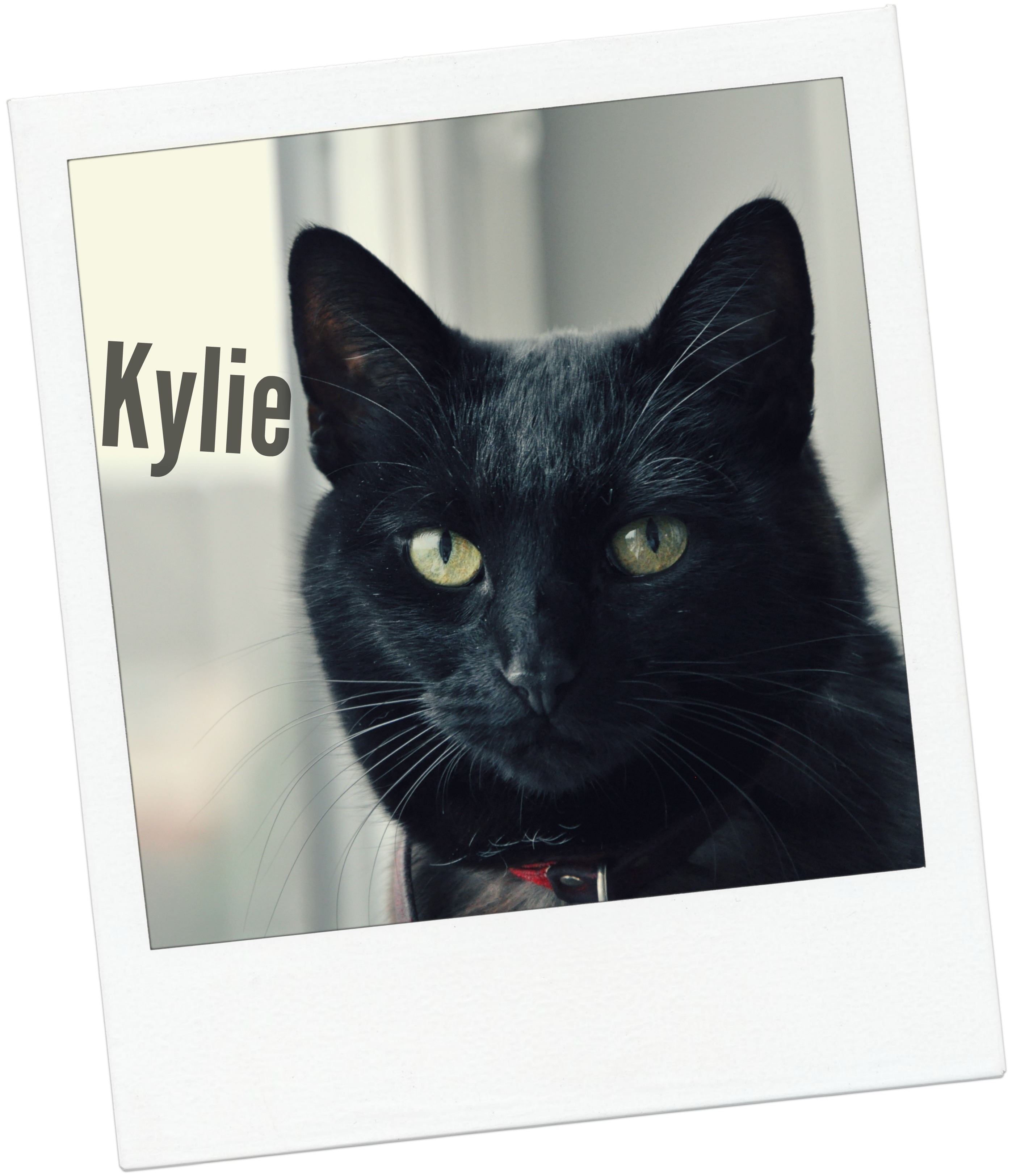 Kylie blog