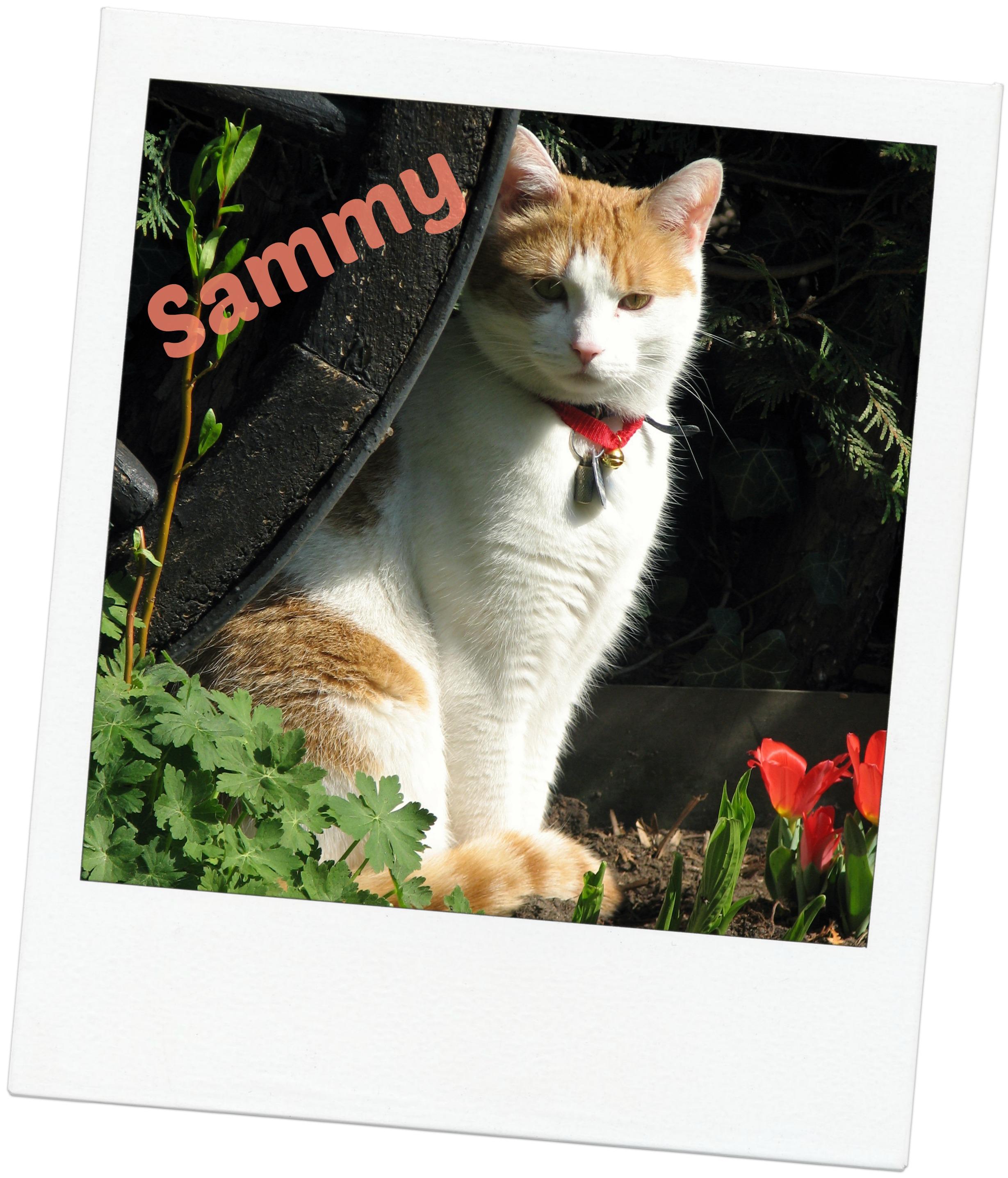 Sammy blog