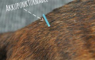 Physiotheraphie Akkupuntur Hund