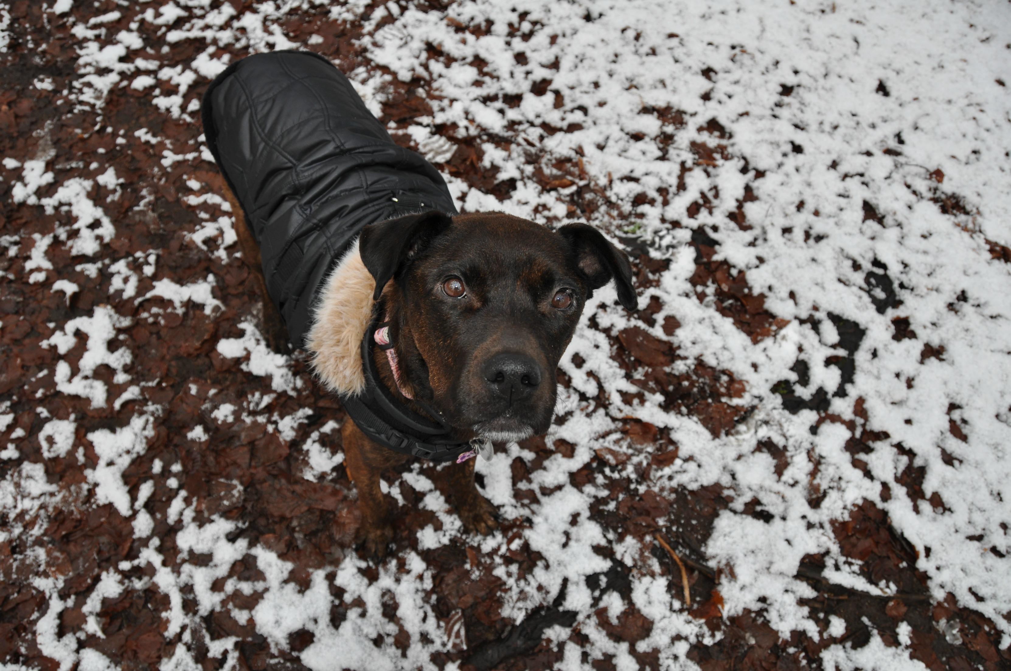 Schnee Clara