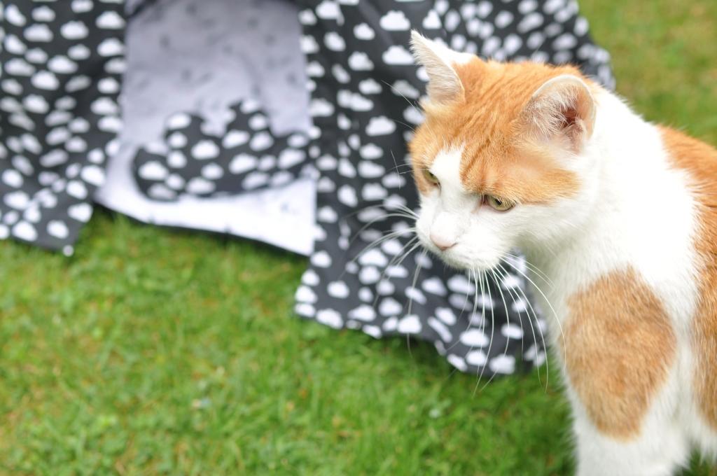 """Howgh!"""" – Katzen & Hundetipi bauen - Zucker und Zimt Design"""