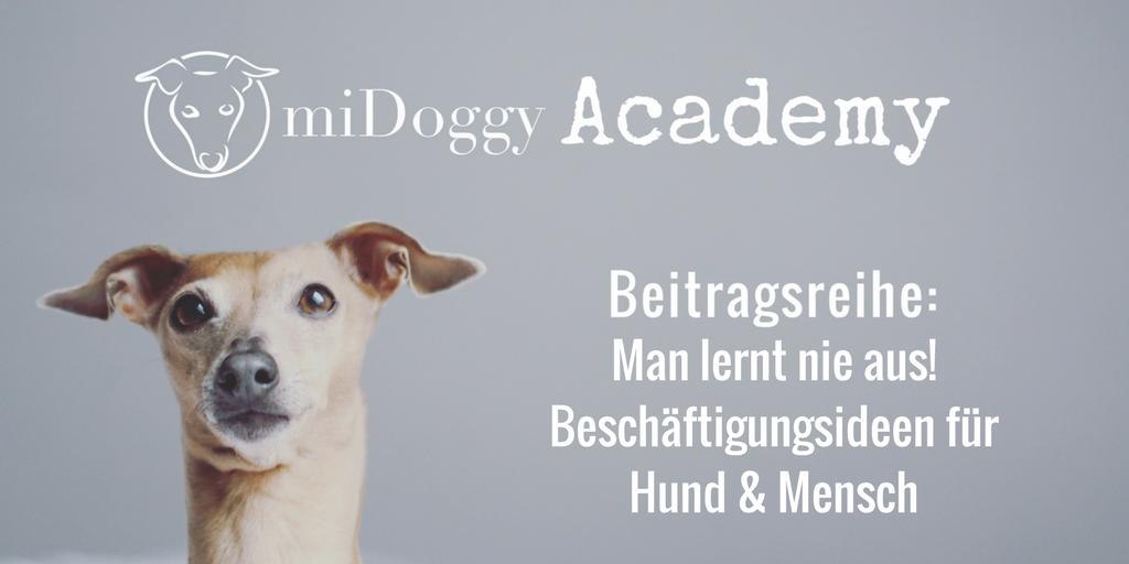 Man lernt nie aus! – Beschäftigungsideen für Hund & Mensch [+ kostenloser Trainingsplan]