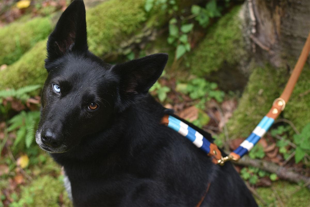 Hund mit Hundegeschirr und Leine von Liebesband