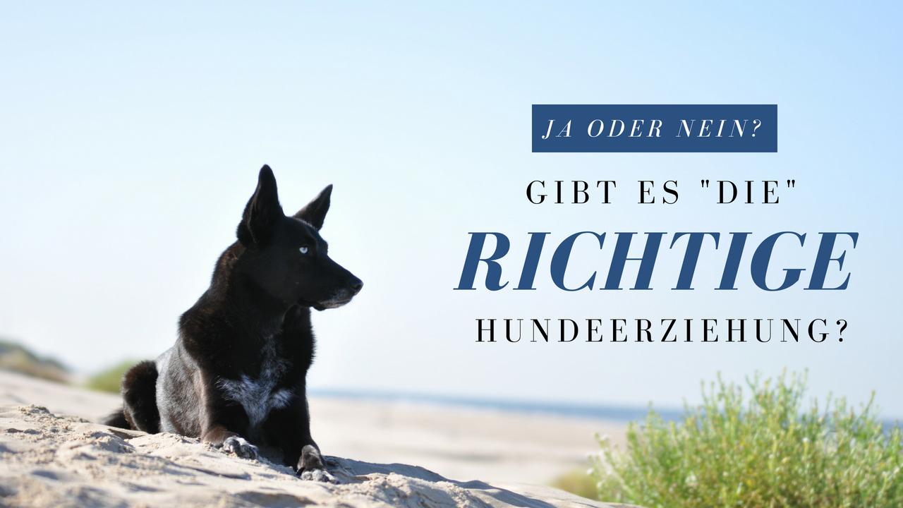 """Gibt es eigentlich """"DIE"""" richtige Hundeerziehung?"""