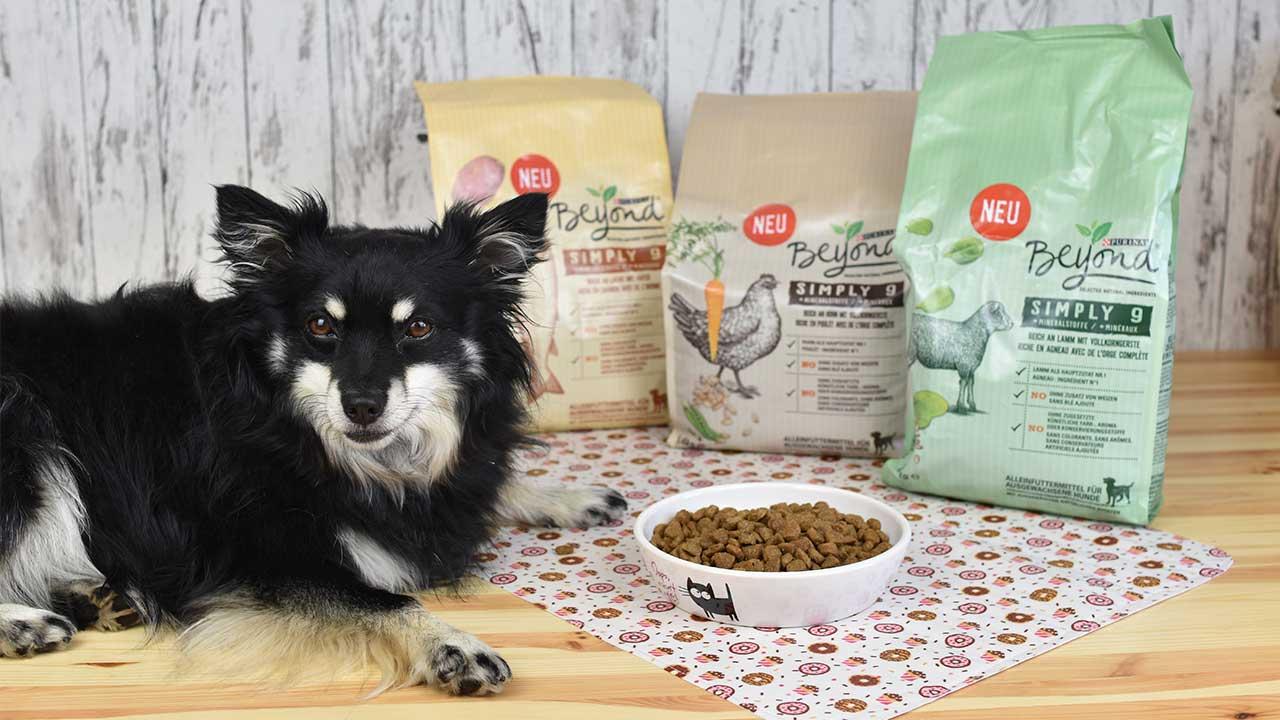 Hundiversum - Zucker und Zimt Design