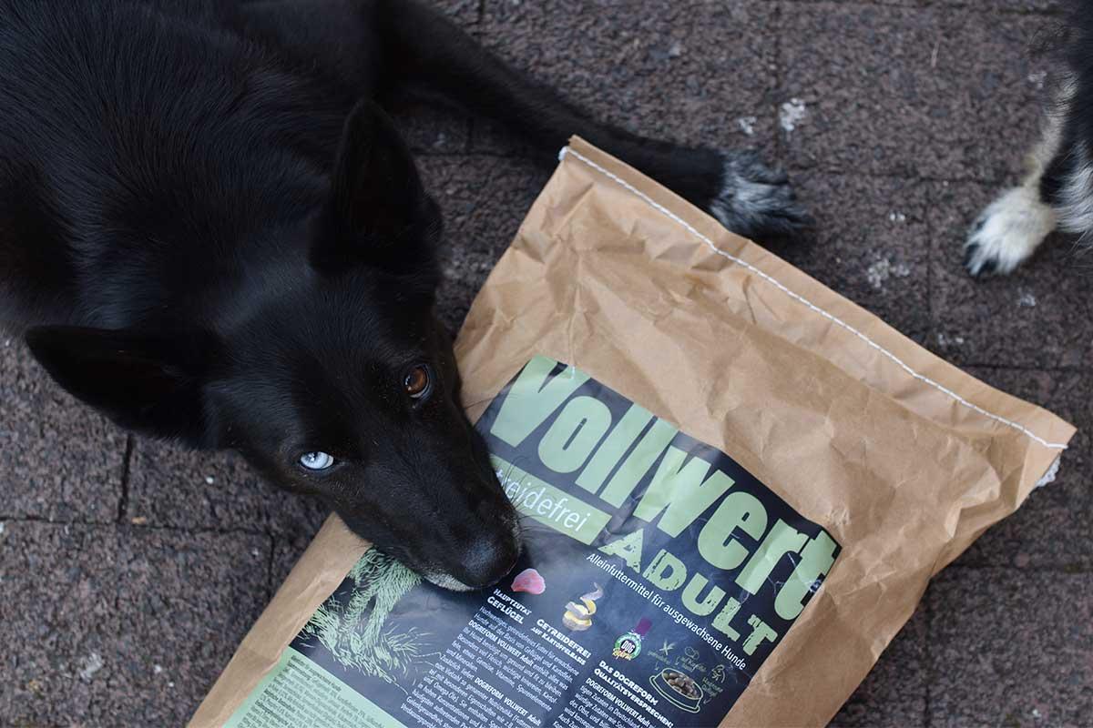 Hund mit getreidefreiem Hundefutter