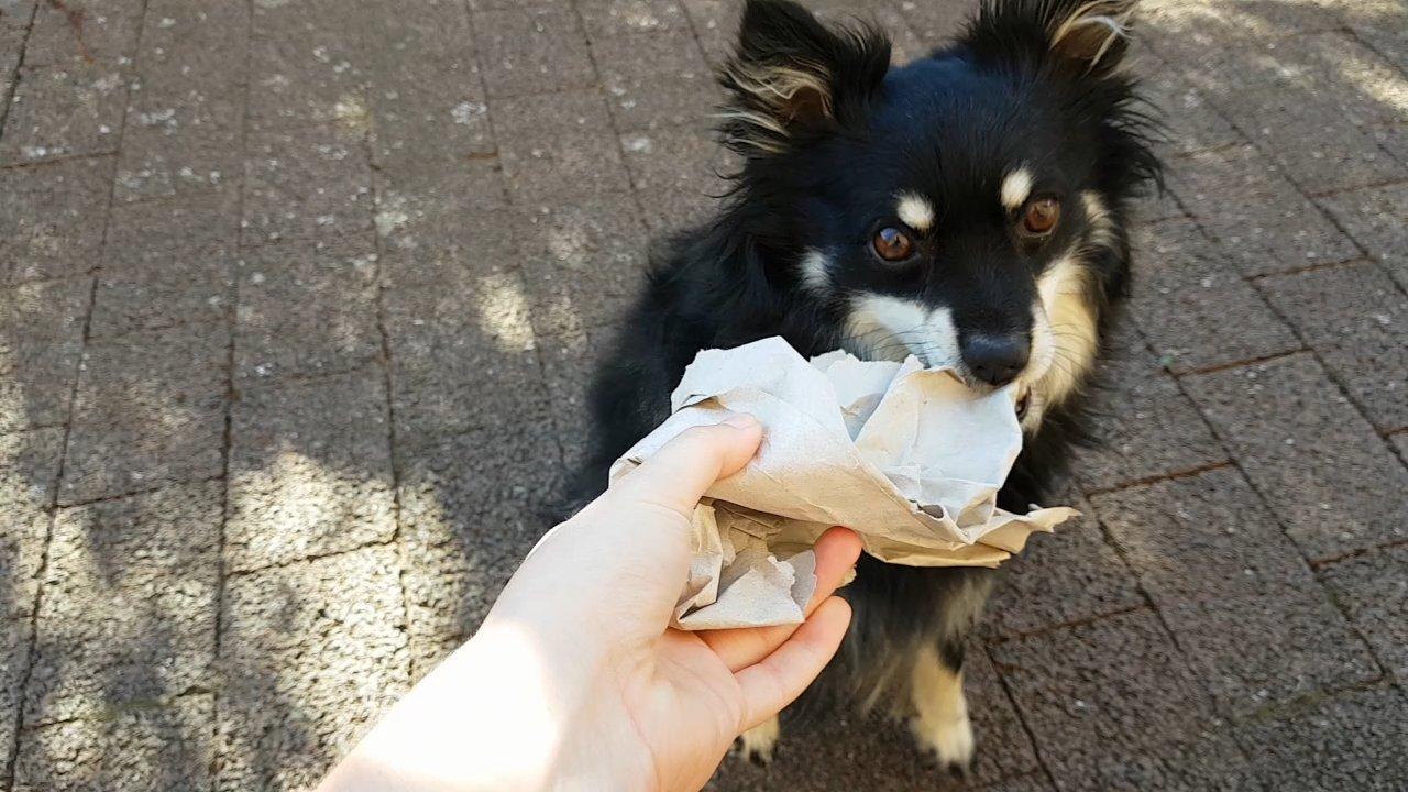Suchspiel mit Hund und Papier