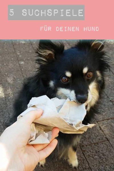 Pin it! Suchspiele Hund