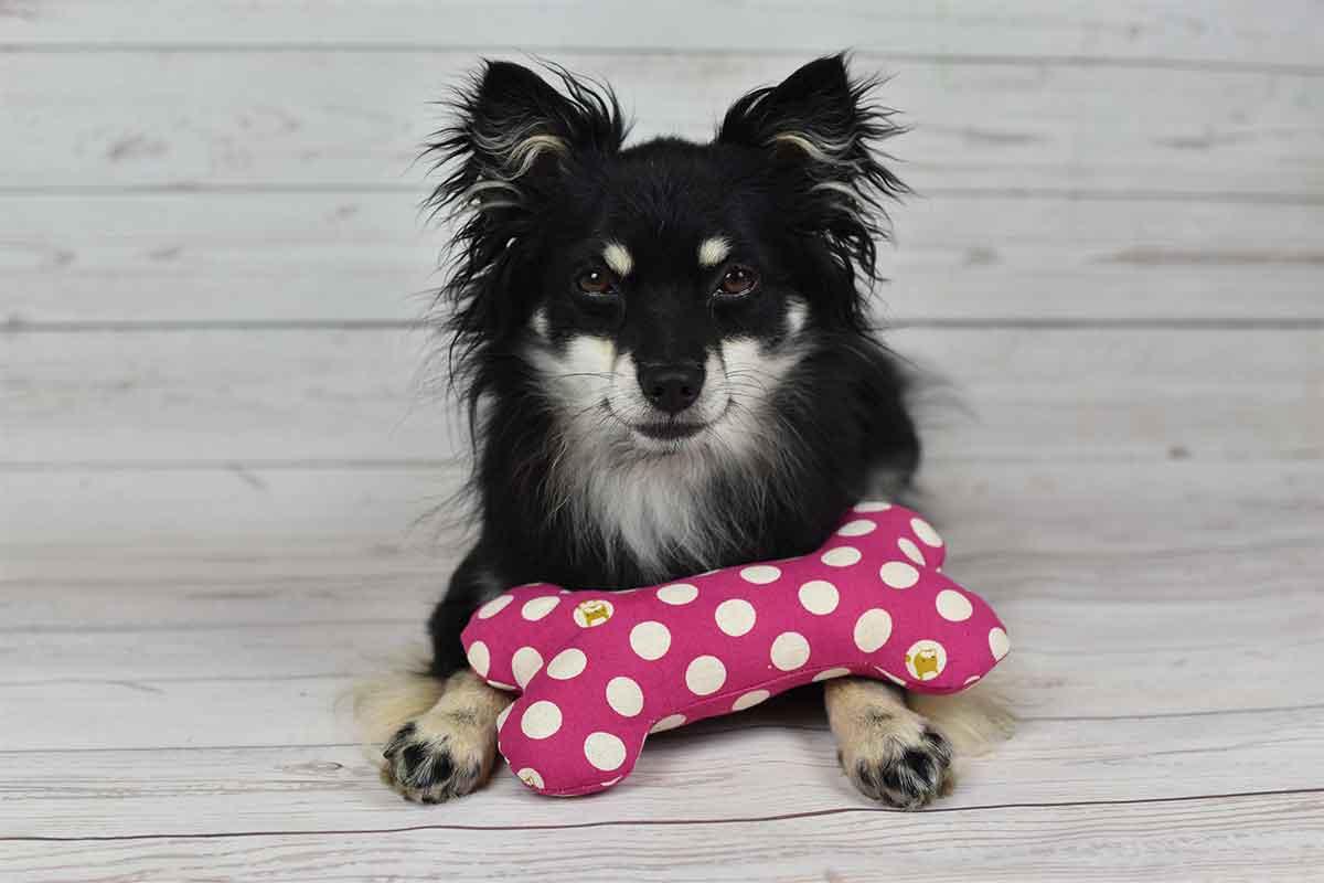 Spielzeugknochen Nähen – aus dem Buch Lifehacks für Hunde + Gewinnspiel