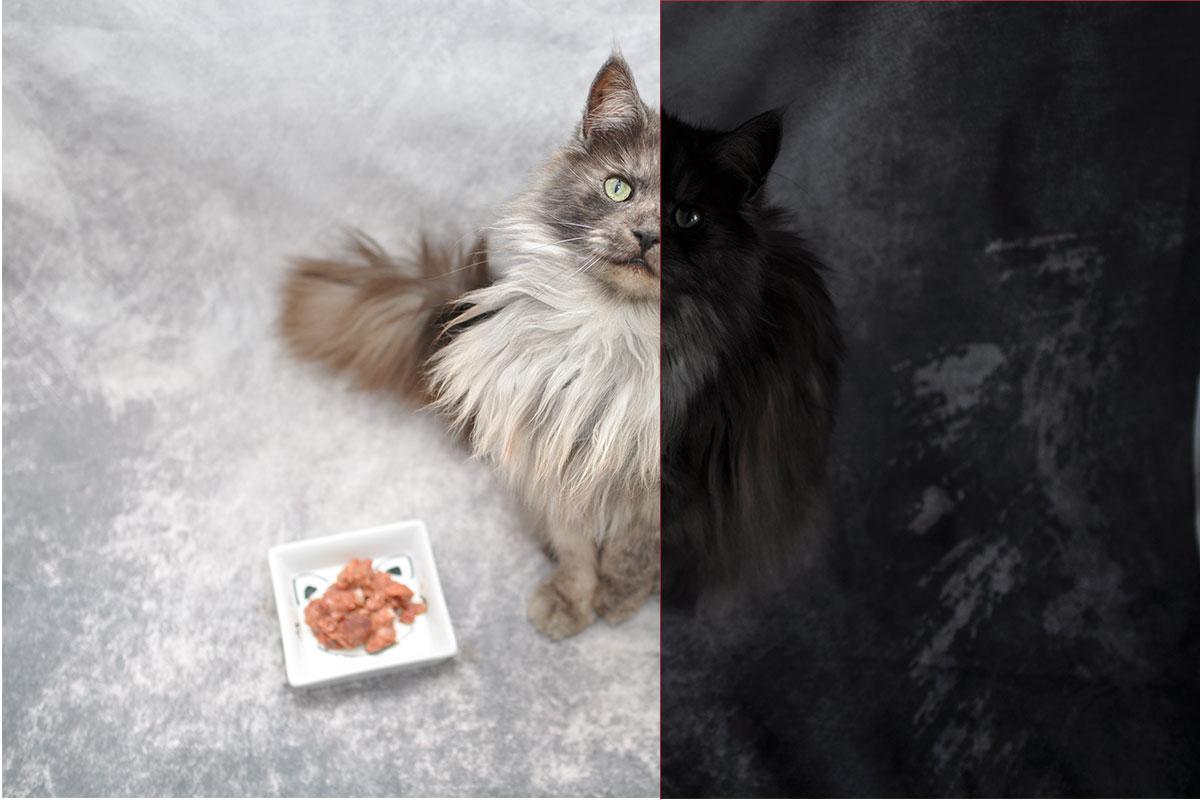 10 Tipps Indoor Fotografie Hund und Katze