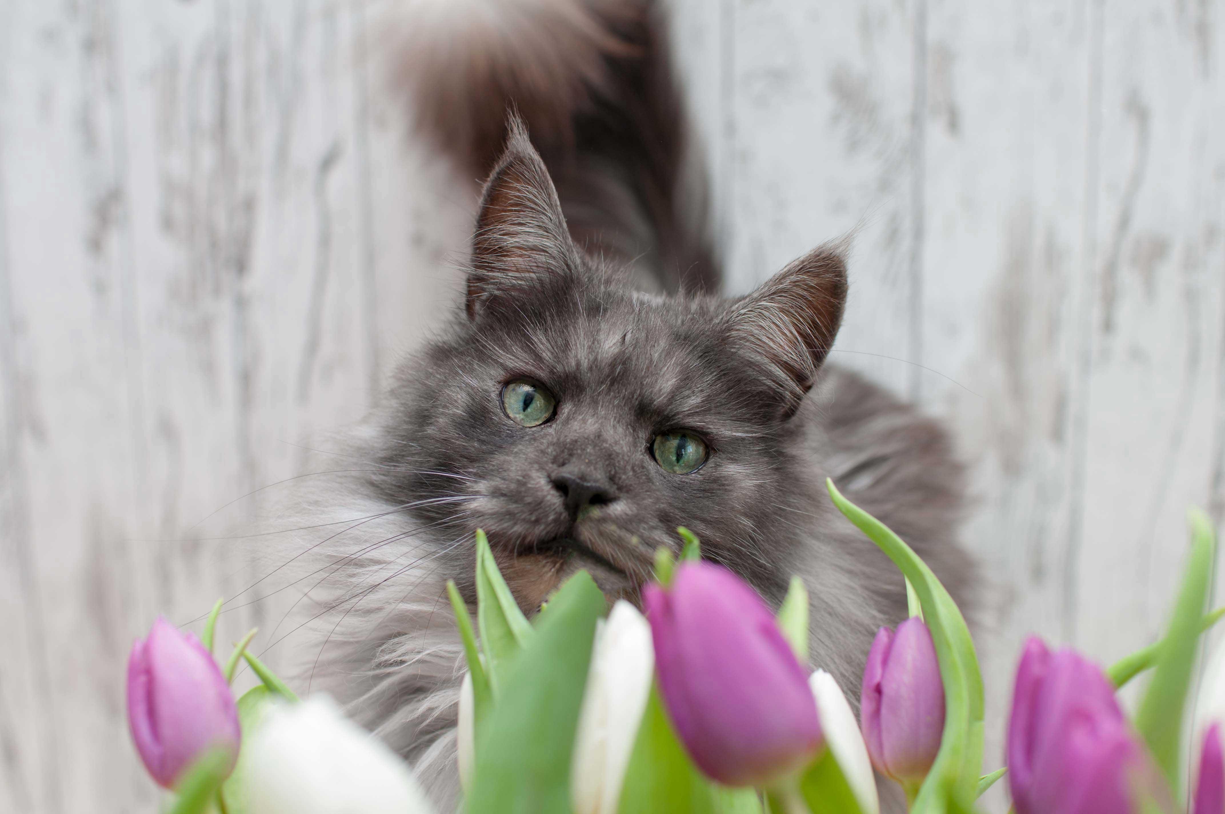 Tipps Katzen & Hunde Fotografie – Indoor Fotoshooting mit Blumen