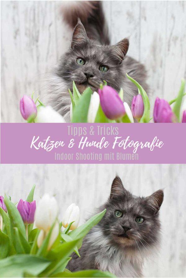 Tipps Katzen und Hunde Fotografie Indoor Fotoshooting mit Blumen