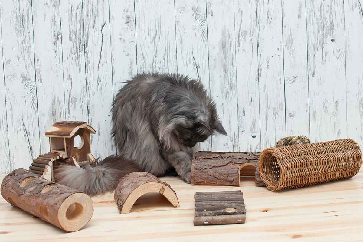 Almo Nature Intelligenzspielzeug Katzen Holz #zweckentfremdet