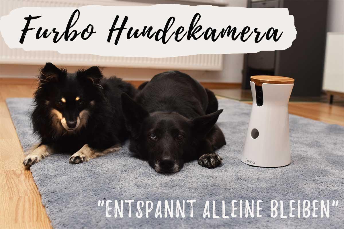 Gewinne eine Furbo Hundekamera!