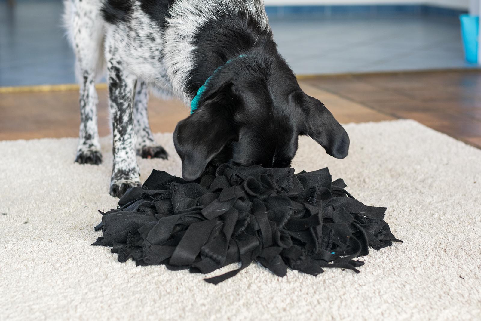 5 DIY Schnüffelspiele / Suchspiele für den Hund