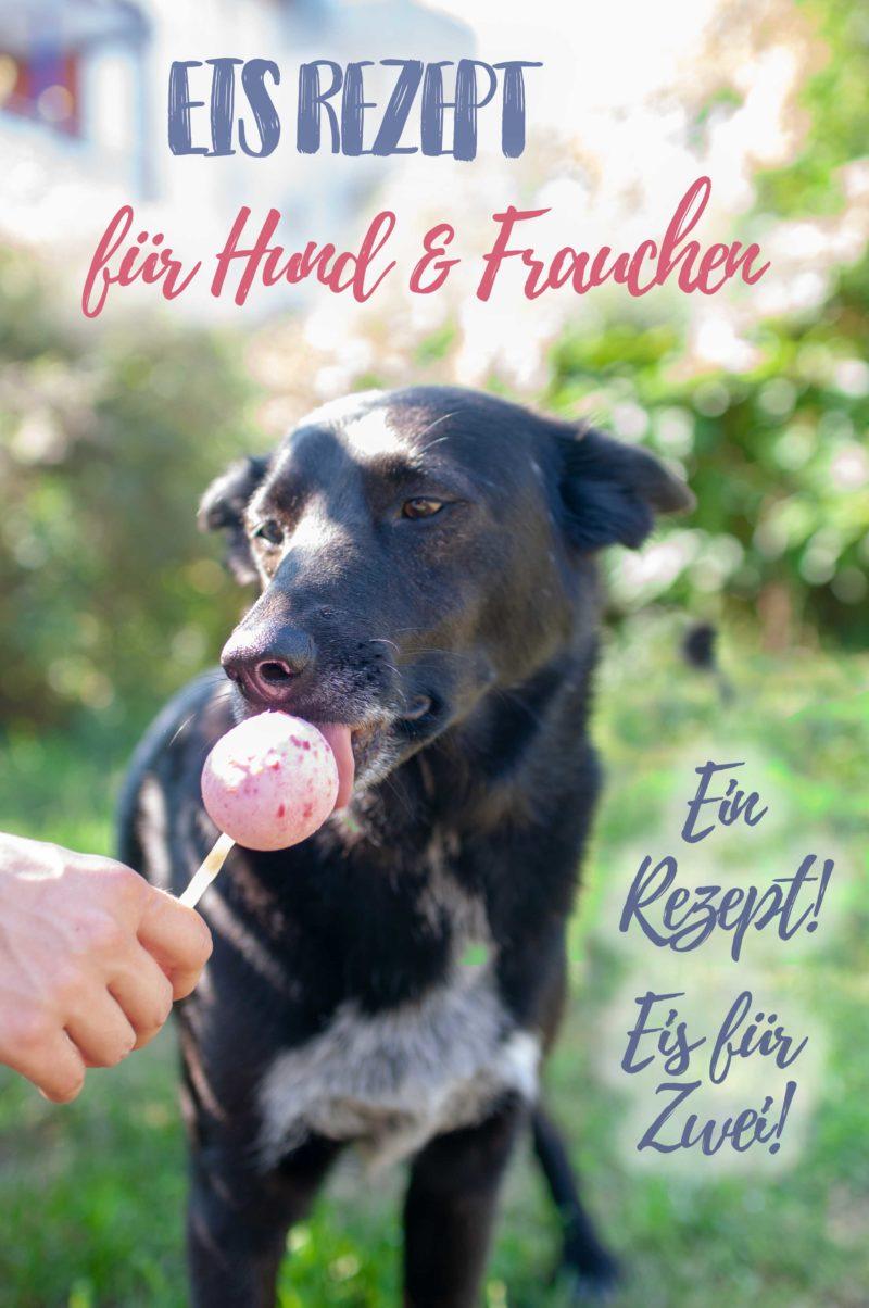 Hundeeis - Eis Rezept für Hund und Frauchen