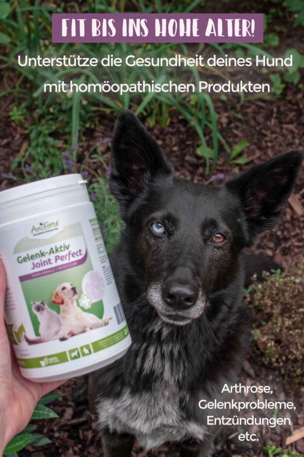 Gelenkprobleme beim Hund- Unterstüzen mit natürlichen Produkten