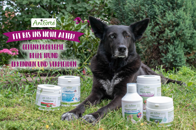 Gelenkprobleme beim Hund – so bleibt dein Hund Fit bis ins hohe Alter! Mit AniForte Gewinnspiel