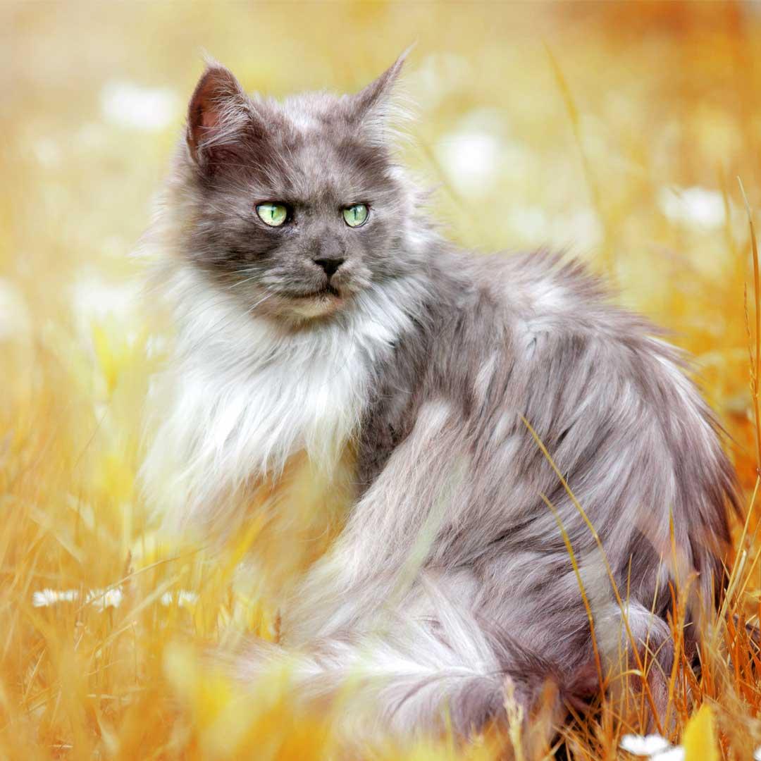 6 Gründe warum du dir bloß keine Katze holen solltest!