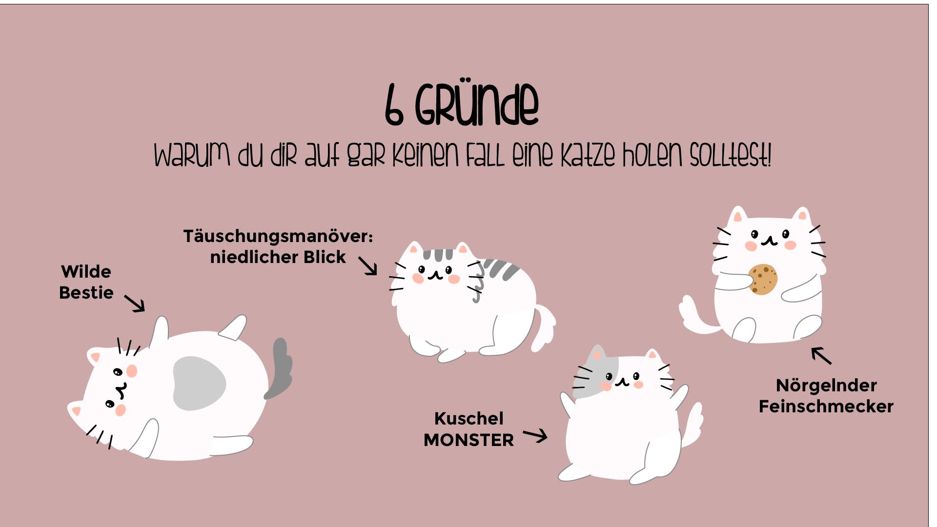 6 Gründe warum du dir auf gar keinen Fall eine Katze holen solltest!