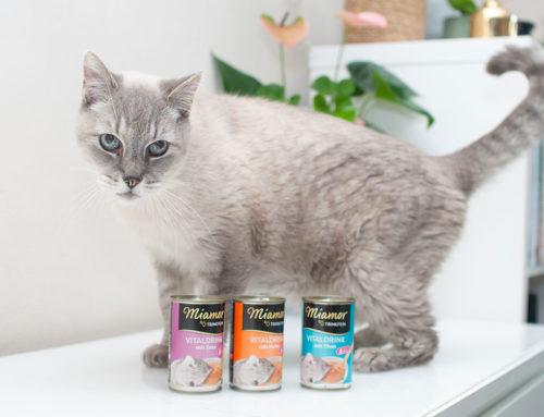 Katzendrink für heiße Tage – motiviere deine Katze mehr zu trinken || mit DIY-Anleitung für niedlichen Katzennapf