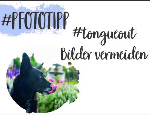 Tipps gegen #tongueout Hundefotos im Sommer || Pfotografie