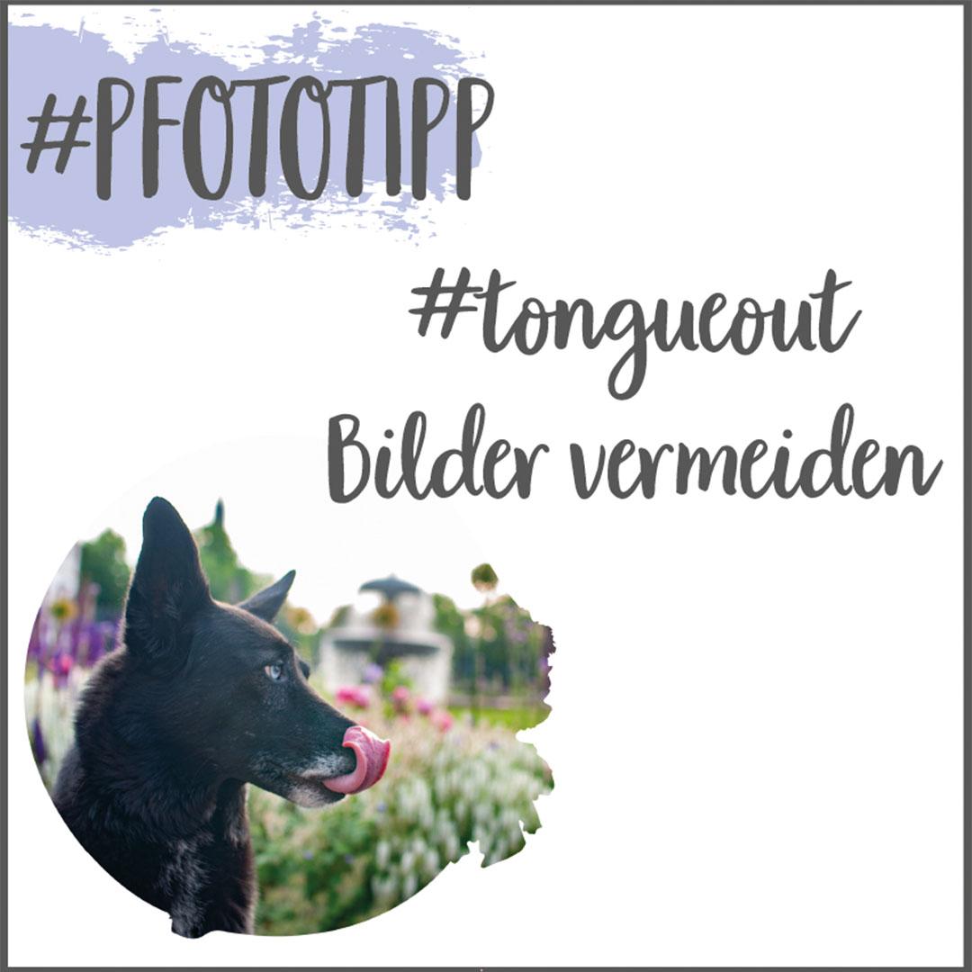 Hundefotografie Tipps für den Sommer gegen Hechelfotos_zuckerundzimtdesign.com